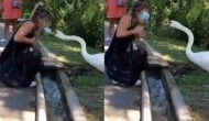 अजब: गले में मास्क लटकाकर हंस के पास बैठी महिला, पक्षी ने ऐसे सिखाया सबक और लगाने का सही तरीका