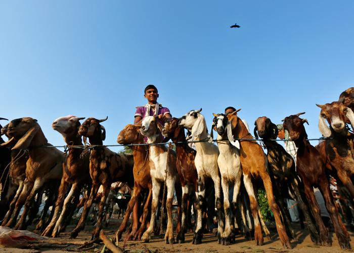 Eid Al Adha. Photo by Ravi Choudhary/Hindustan Times via Getty Images