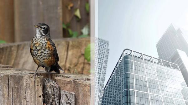 Birdfriendly glass.jpg