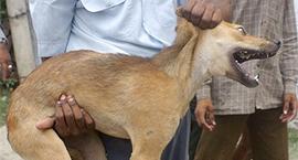DOGS-POPULATION_NON-HERO_000_HKG2003082054825.jpg