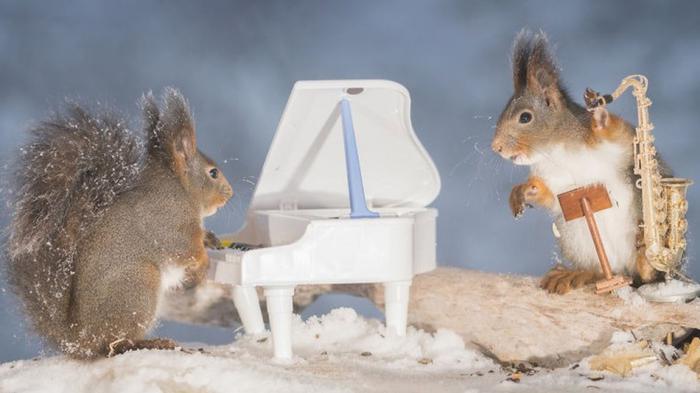 squirrel-embed1.jpg
