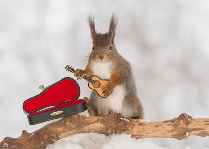 squirrel-embed2.jpg