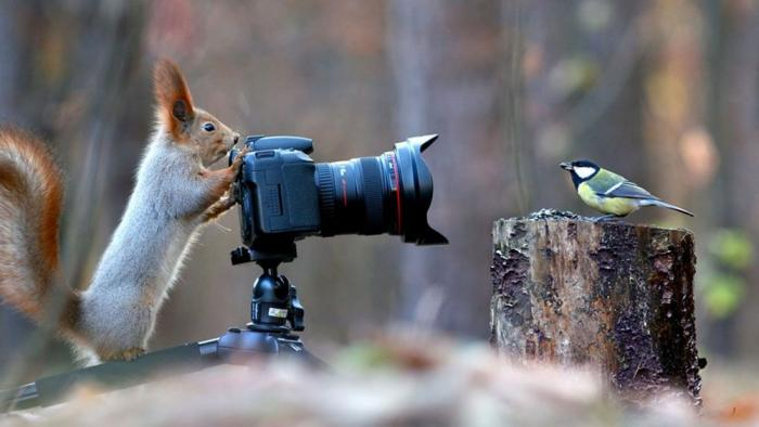 A photographer squirrel and his muse, a bird, inspire Photoshop battle of the century