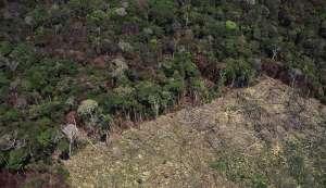 पर्यावरण का संकट: जंगलों का दायरा दुनिया में खतरनाक तरीके से सिमट रहा है