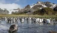 World's largest marine protected area created in Antarctica