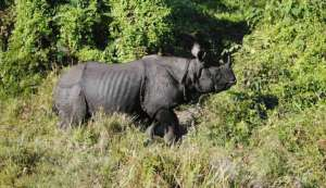 Rhinos to get new homes in India