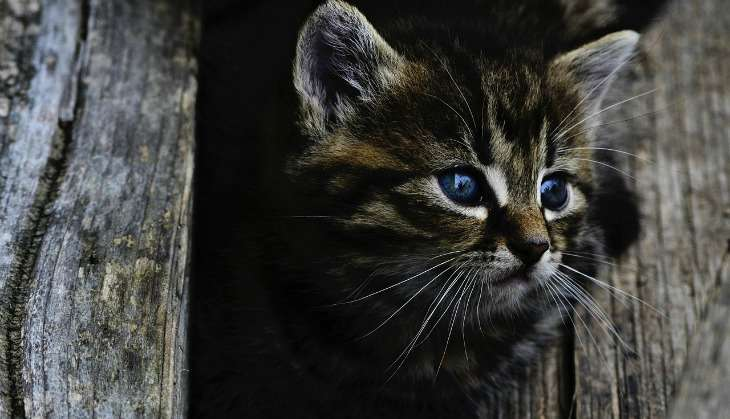 Pakistani vet sued for Rs 2.5 crore for having allegedly causing death of 2-month-old kitten