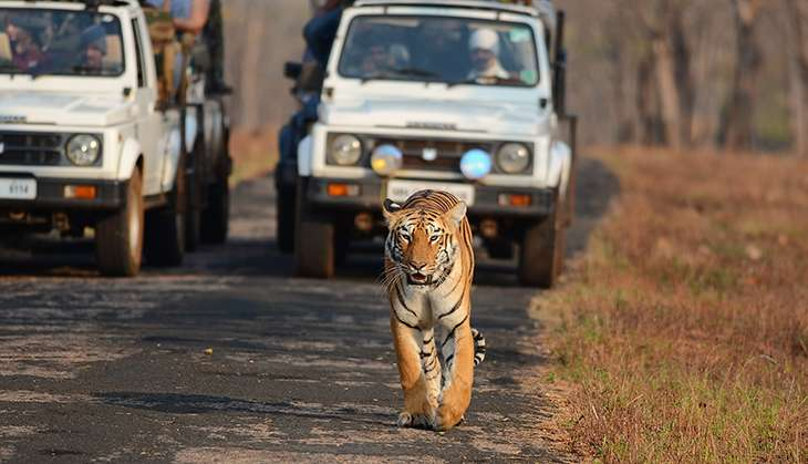 Tigers are under threat in Maharashtra
