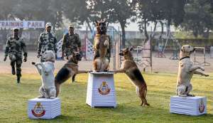 These mutts at National Training Centre for Dogs aspire for greatness