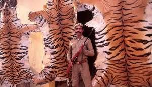 शिकारियों की वापसी: 2016 बाघों के लिए बना काल, 98 बाघों का शिकार