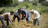 किसान क्रेडिट कार्ड्स की जगह रुपे कार्ड्स से बंगाल के किसान परेशान